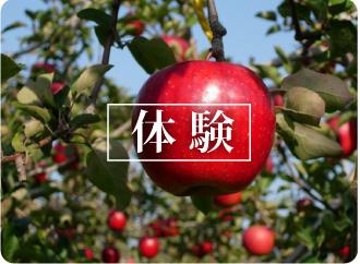 tatsumi_top1_48