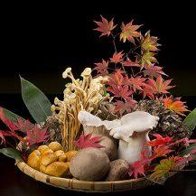 あんなきのこやこんなきのこ、秋の味覚を味わってください