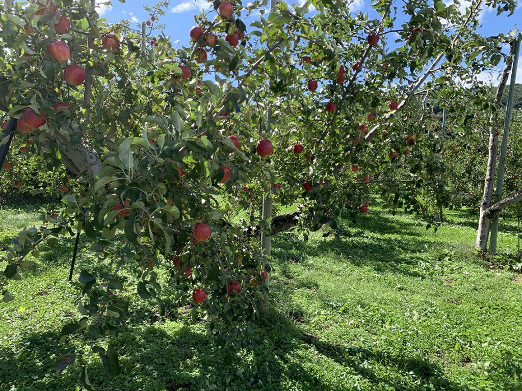 阿部りんご園